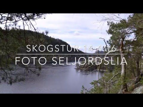Bli med på skogstur :) (Foto Seljordslia)