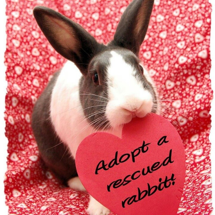 Adopt a Rescued Rabbit -   So many people don't know how to take care of a rabbit .. they are one of the easiest, sweetest pets to own.