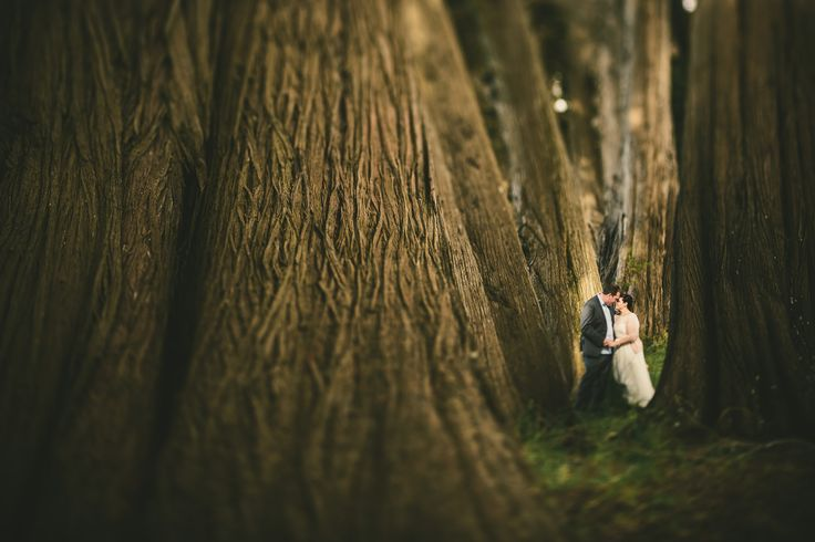 Sarah & Paul, in the smallest little pocket of light amongst the biggest of trees @ Otaihanga. Congratulations to Sarah & Paul on a beautifully personal and intimate wedding.