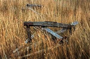 Old farm fences in wheat fields; just west of Kee homestead in Rural Municipality of Perdue, Saskatchewan 1991     PERDUE <3