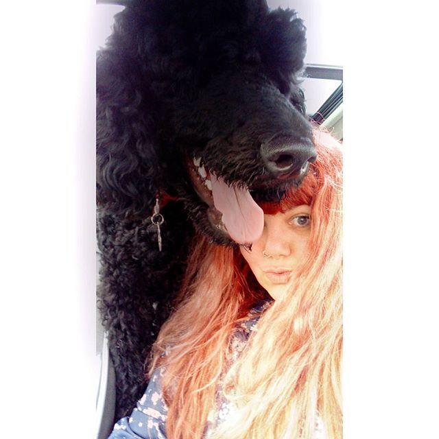 Me and my baby boy. ✌️💕💟🐩😘 😍  #dog #poodle #poodle 🐩 #poodlesofinstagram #poodlelove #poodles #standardpoodle #poodlemania #poodlemom #portsmouth #psychiatricservicedog #servicedog #assistancedog #amadeus #cptsd #agoraphobia #GAD #lovemydog #instapoodle #babyboy #dogsofinstagram #dogselfie #furbaby