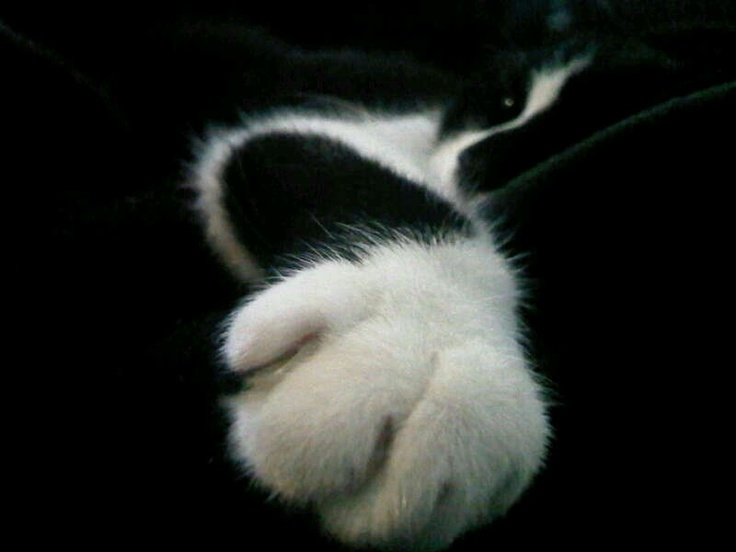 Wow look at your big paw!!