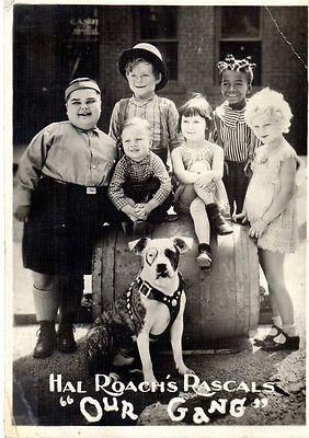 1799 best remember me images on pinterest german shepherds german shepherd dogs and tv series for Hal ingang