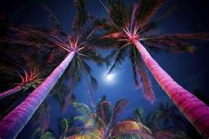 Perfect nightSouthbeach, Moon Parties, Backyards Lights, Beach Parties, Tropical Backyard, Palms Trees, Night Time, Real Estate, South Beach