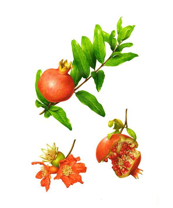 изображения фруктов и овощей