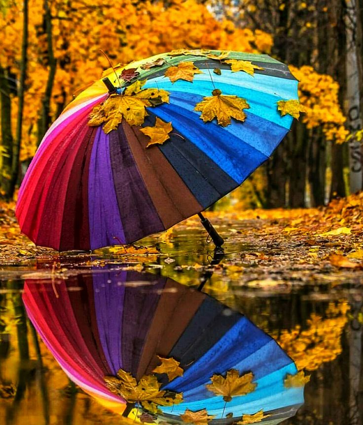 Анимационные картинки осень зонт природа пара