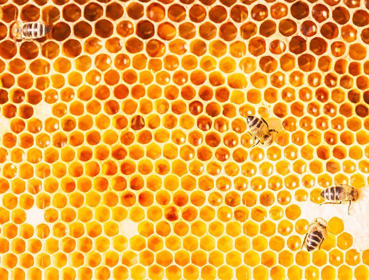 Hello, Honey! Какой мёд делает нас лучше? | Salatshop ♥ You
