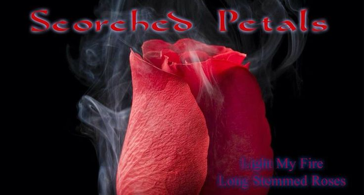 Pink Zebra Recipes- Scorched Petals.  Featuring: Light My Fire and Long Stemmed Roses