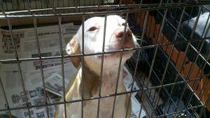 Une loi est proposée forçant le maltraitant à payer pour les soins du chien qu'il martyrise. (USA) On devrait faire la même chose en France et partout dans le monde !!