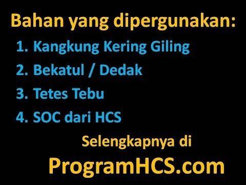 Kecil2 Bikin Pakan Fermentasi Ternak Kambing HCS