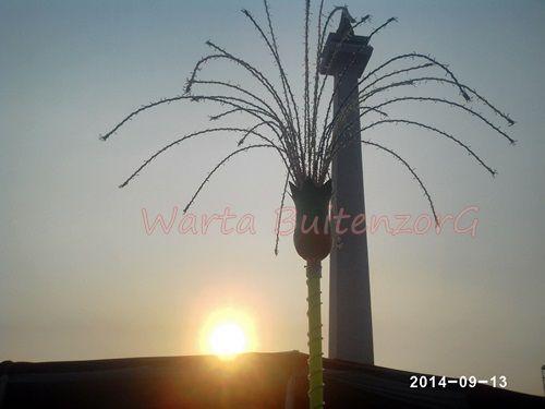 Sunset di Tugu Monas 6