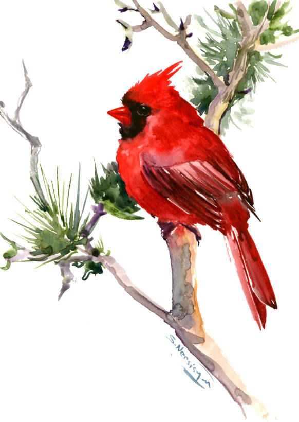Red Cardinal Bird Artwork Original One Of A Kind Watercolor