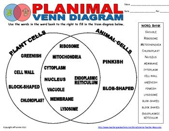 Plant Animal Cell Venn Diagram