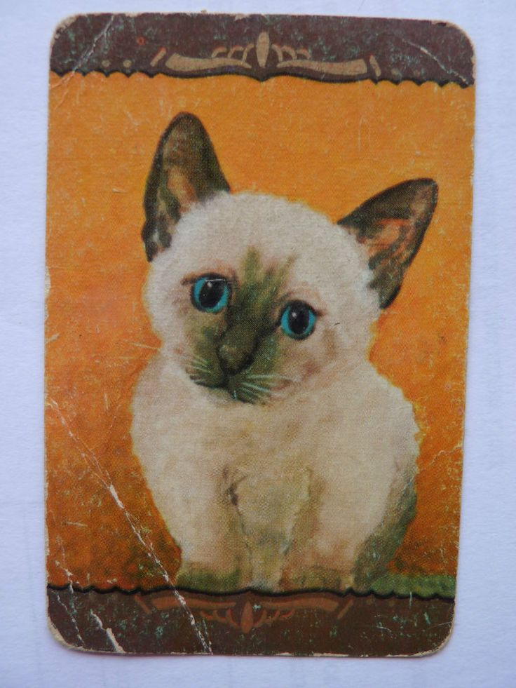 COLES UN NAMED CAT KITTEN ONE Single Genuine Vintage Swap Playing Card