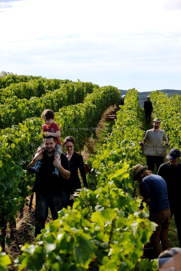 The 5 wineries you can't miss in north-east Tasmania.