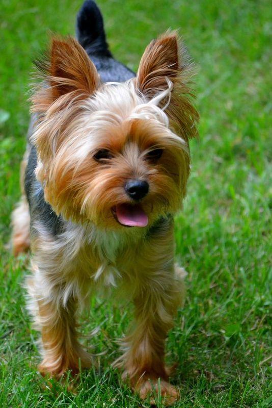 Картинки и фото маленьких собачек