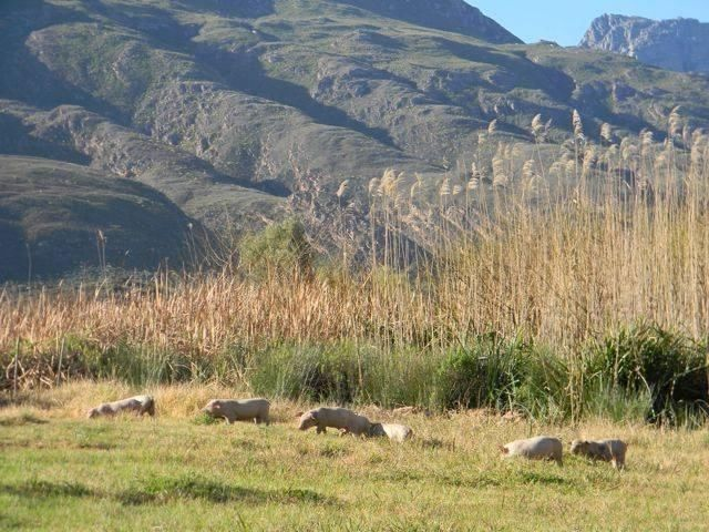 Farm For Sale in Ladismith | Other | Gumtree South Africa | 142365256