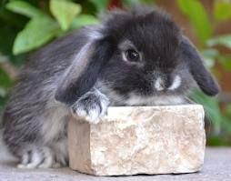 coniglietti nani - Cerca con Google