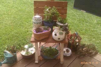 My recycled chair with succulent display.