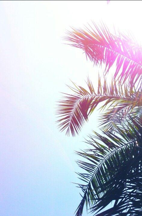 Amor por las palmeras