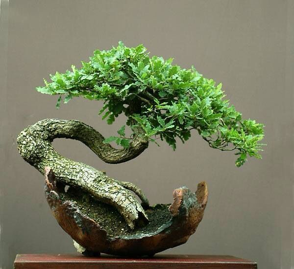 Bonsai THE BEST HOME GARDENING GUIDE IS WAITING FOR YOU.