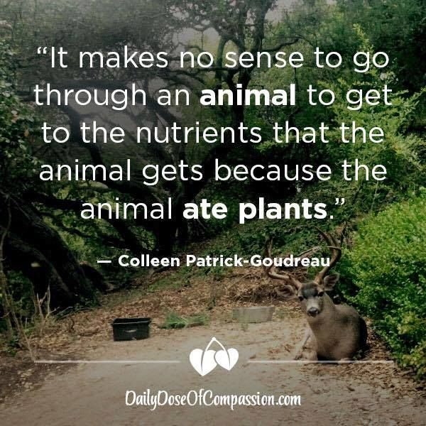 Famous Wildlife Conservation Quotes: Best 25+ Vegan Quotes Ideas On Pinterest