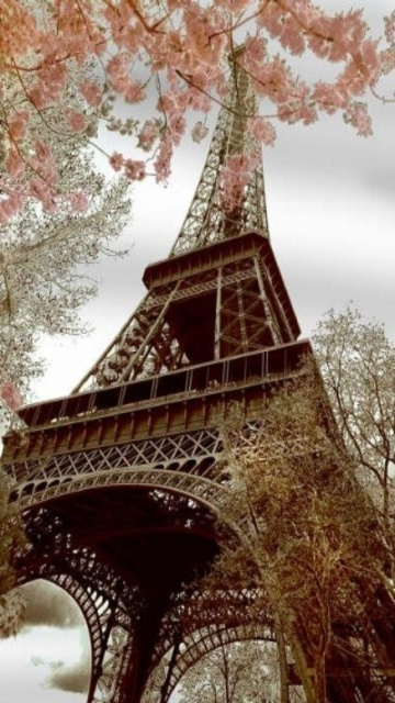 Eat Macaroons under the Eiffel Tower!
