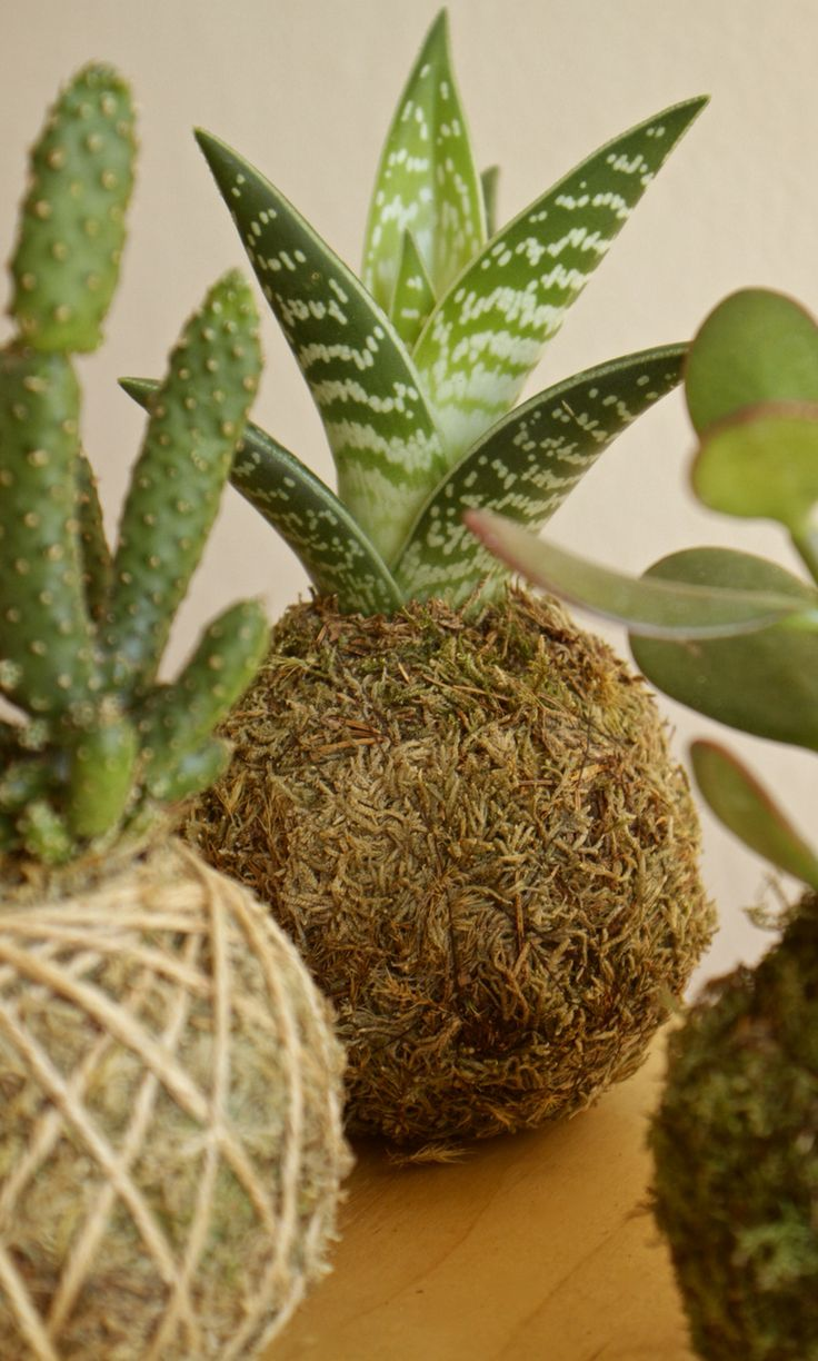 320 best Kokedama - the Japanese Moss Ball Plant images on ...