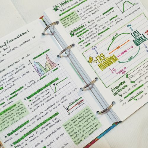 "getstudyblr: ""  11 . 06 . 2016 //  more photosynthesis notes! """