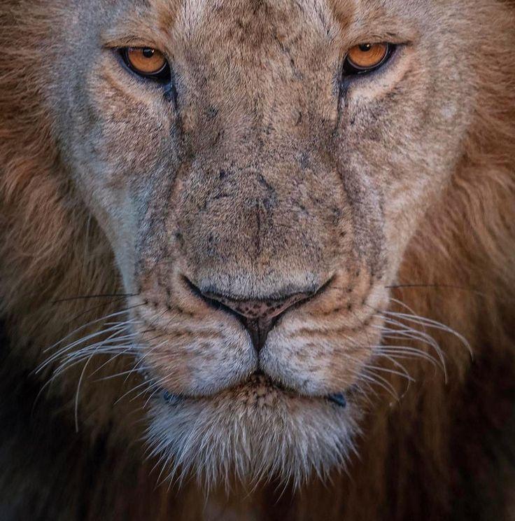 "17.4k Likes, 63 Comments - Wildlife Planet (@wildlifeplanet) on Instagram: ""Majestic   Photo by @majedphotos #WildlifePlanet"""