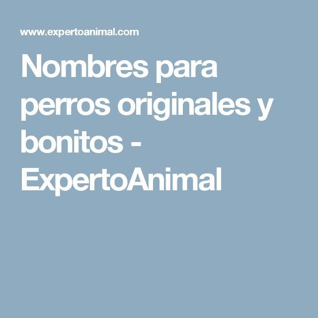 Nombres para perros originales y bonitos - ExpertoAnimal