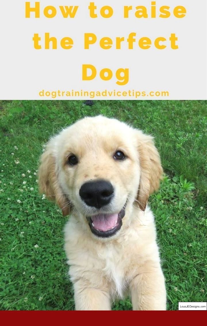 How To Train A Dog To Stay On His Own And Pics Of How To Train A
