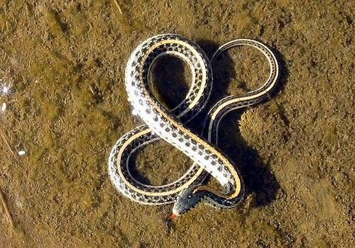 snakes love ampersands