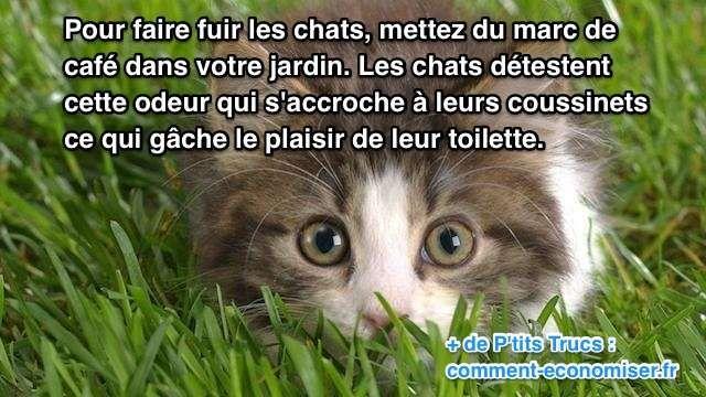 Vous en avez assez des chats qui viennent uriner dans votre jardin ?  Découvrez l'astuce ici : http://www.comment-economiser.fr/repulsif-pour-faire-fuir-les-chats.html?utm_content=buffer80ce1&utm_medium=social&utm_source=pinterest.com&utm_campaign=buffer