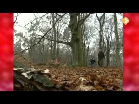 9-11-2007 Afl.: Ti-ta-toverkleuren: liedje. paddestoelen in het gras lekker stampen in een plas..... rond minuut 9