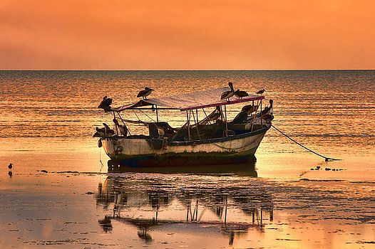 Pelicans Sunset, Sun down in the Caribbean Sea off the island of Trinidad. Wooden fishing boat caught in the sand at low tide, with pelicans resting on it. The sunset glows off the smooth surface of the caribbean sea.
