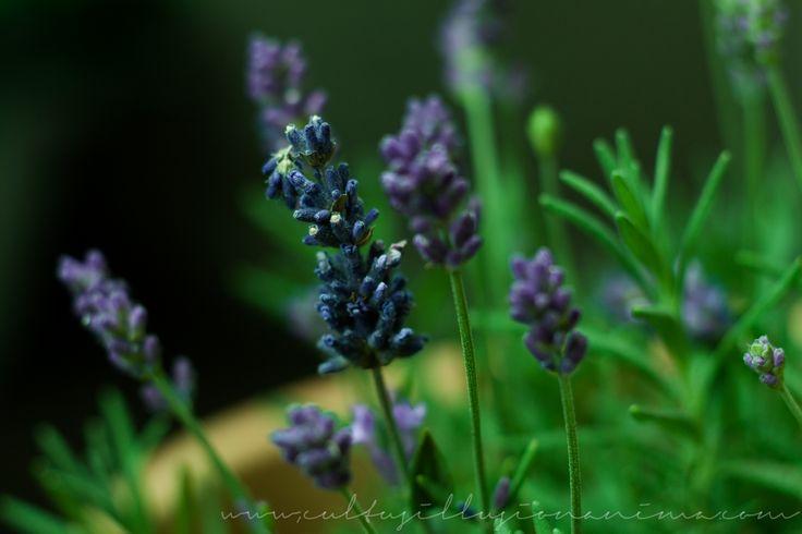 23 best plants images on pinterest plants terrarium. Black Bedroom Furniture Sets. Home Design Ideas