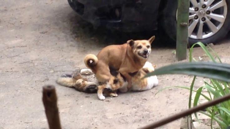 Catdog: The Beginning / Котопёс: Начало