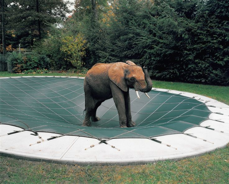 172 Best Loop Loc Pool Covers Images On Pinterest Pools