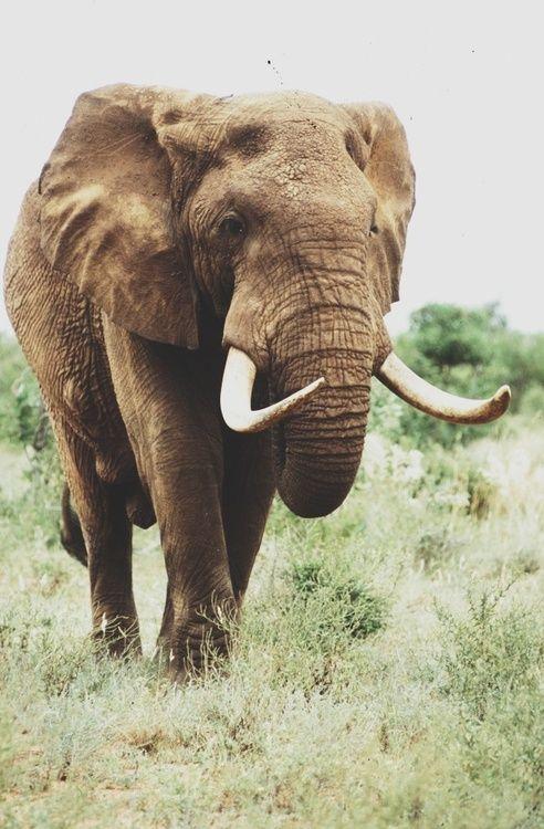 {<3} Elephant.
