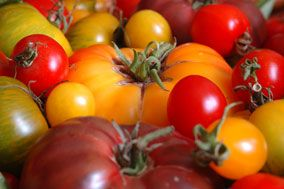 Declining Nutritional Value of Produce Due to High Yield Selective Seed Breeding.