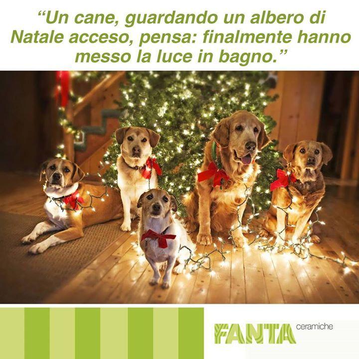 Avete presente lo sguardo che fanno i nostri cuccioli quando accendiamo le lucine del nostro albero di Natale? <3 ;)   http://ift.tt/2f9ou9g #Fantaceramiche