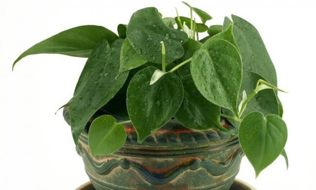 Plantas Para Baño Feng Shui:Las mejores plantas para el baño según el Feng Shui – IMujer