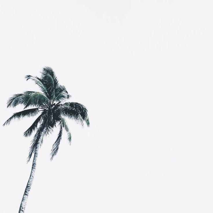 Island State Co island life inspo || palm trees, ocean breeze, sun, sand, salty ocean air, tropical island paradise || @Island State Co #islandstateco #islandlife