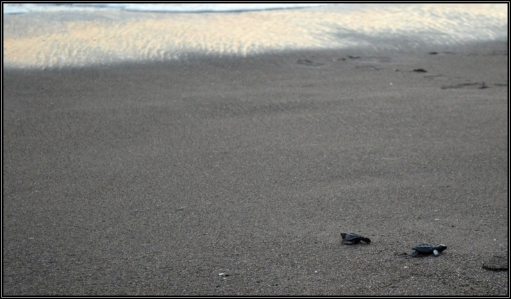 Želvy na pláži