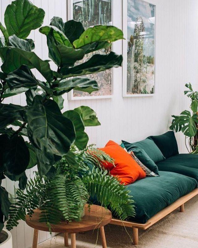 Meer dan 1000 afbeeldingen over kamerplanten op pinterest for Zimmerpflanzen trend 2016
