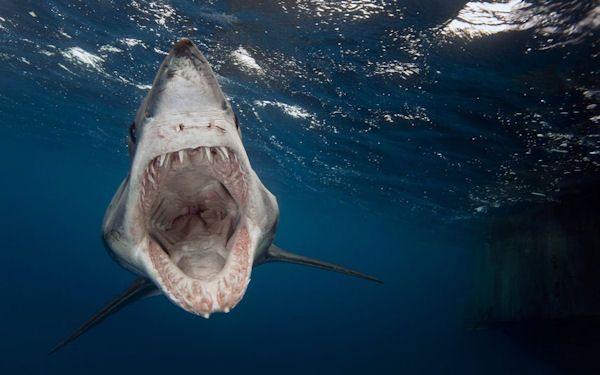 photo humour insolite requin geule ouverte