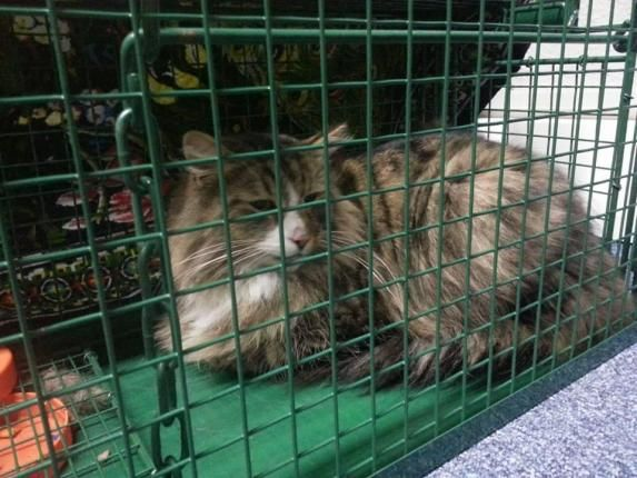 Cat missing for a year found living in pet food warehouse - UPI.com