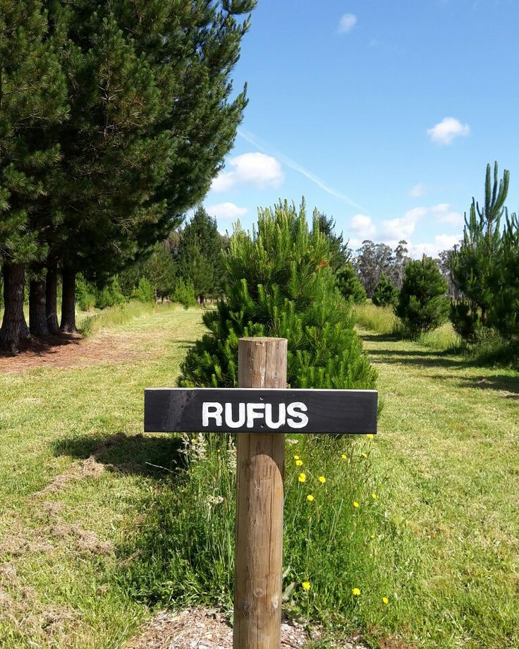 We make it easy to track down your tagged Christmas Tree - all our rows are named - Tasmanian High Peaks of course!
