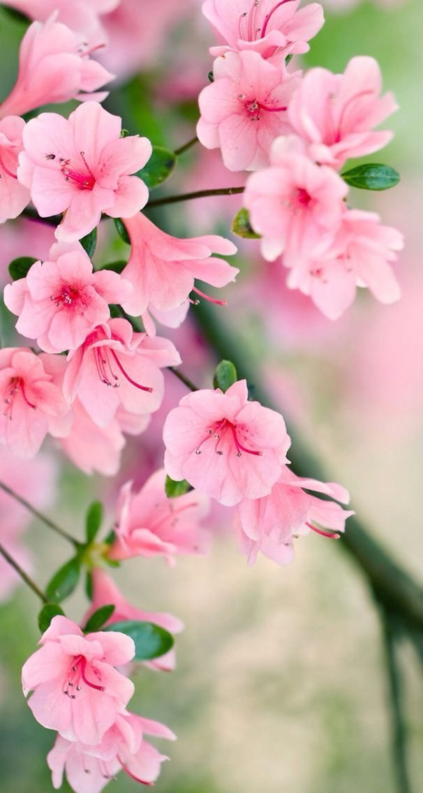 Pink Nature Wallpaper Picture